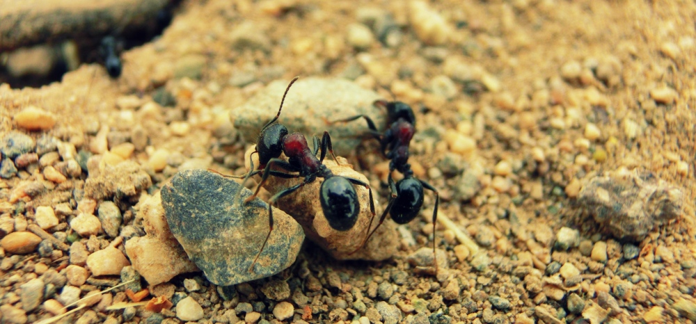 10 - Ant
