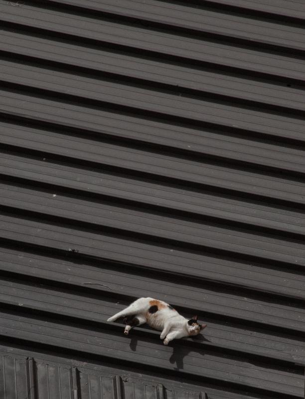 ... Sur un toit brûlant