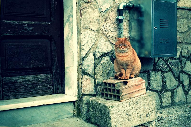 chat gaz pour moi !
