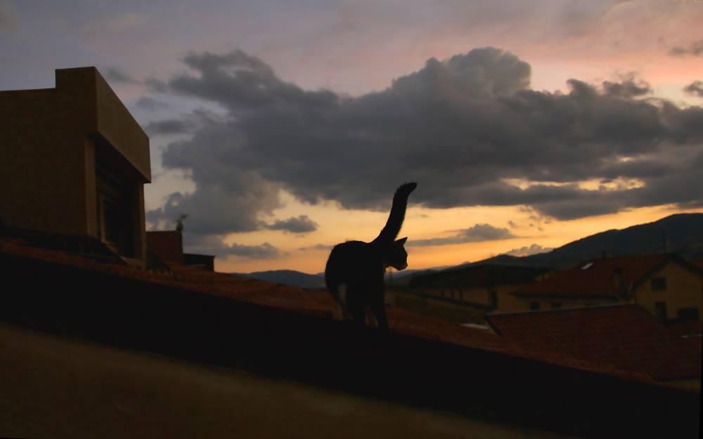 tramonte sul tetto