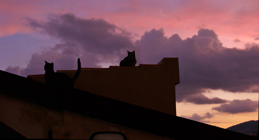 le soir tous les chats sont noirs