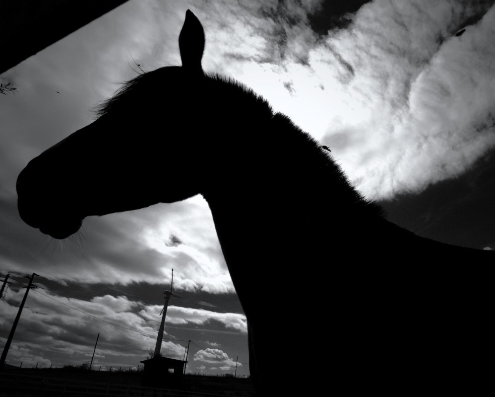 clouds , flies and horse