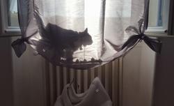 chat en papillote
