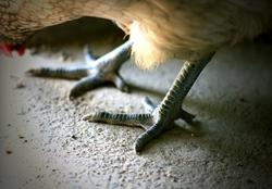blue crocodile shoes