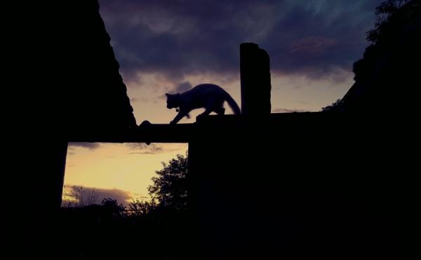 boulevard des chats