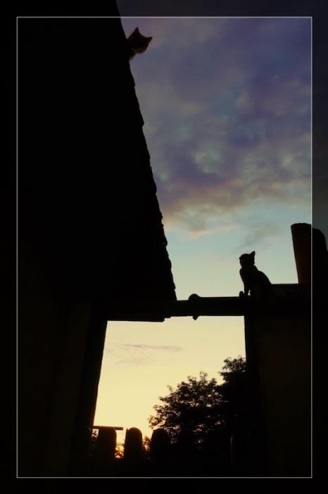 promenade sur les toits