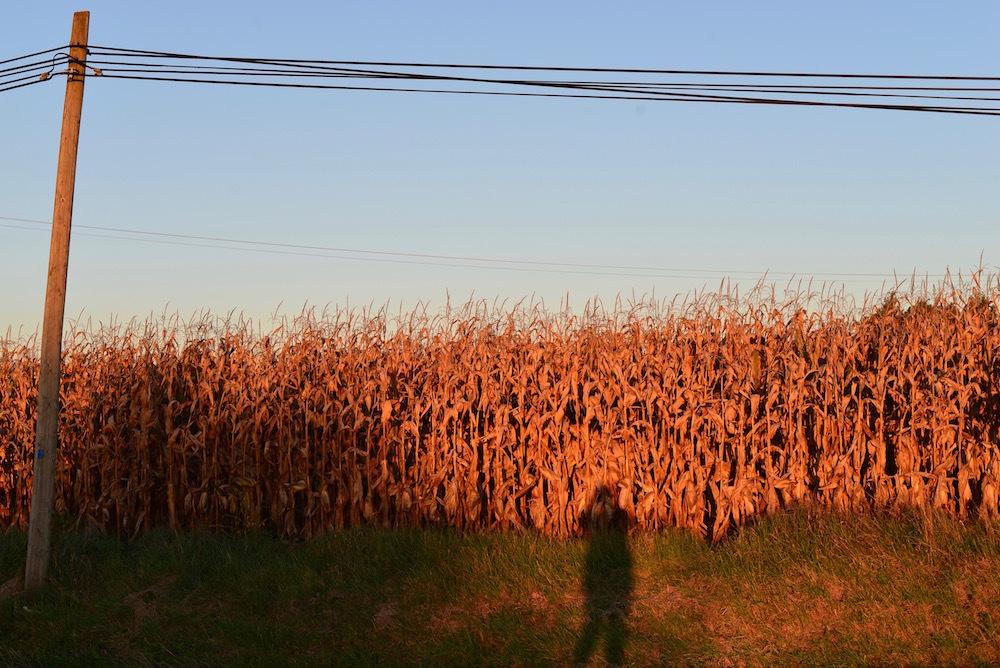 corn field selfie