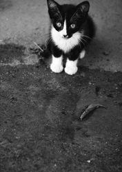 little Mojito