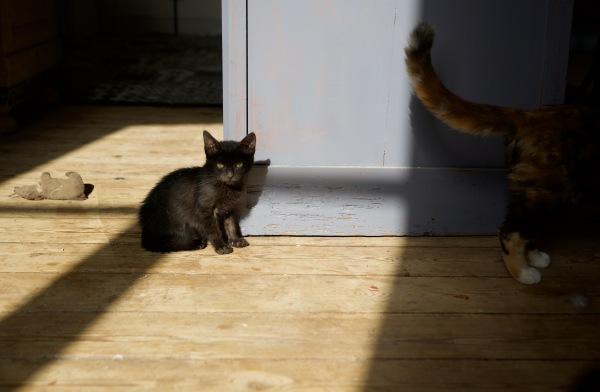 le chat ou la souris
