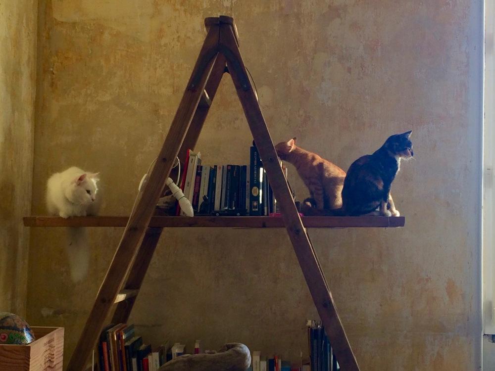 arbre à chats