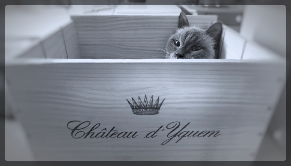 chat(eau) grand cru