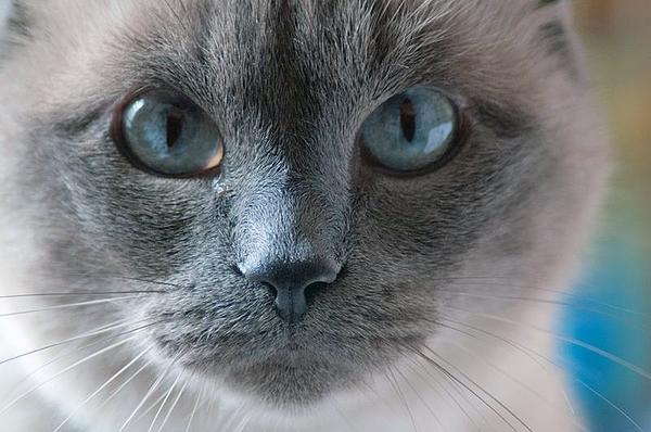 Plus bleu que le bleu de ses yeux ..