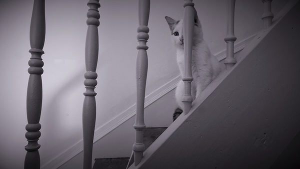 la gardienne est dans l'escalier