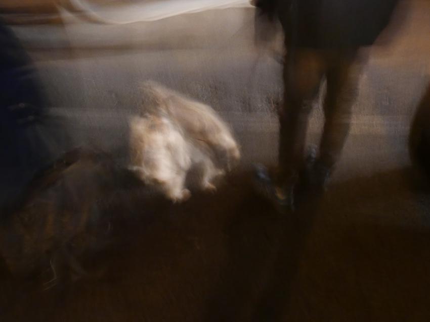 impression promenade du chien