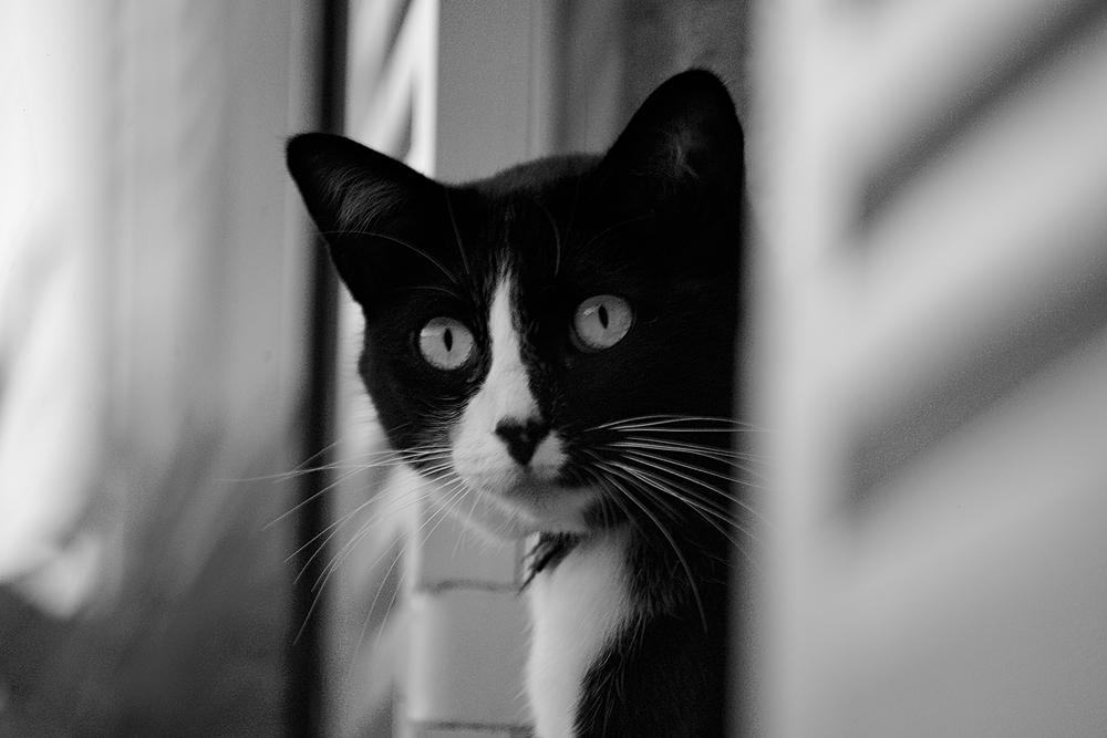 chat de coeur