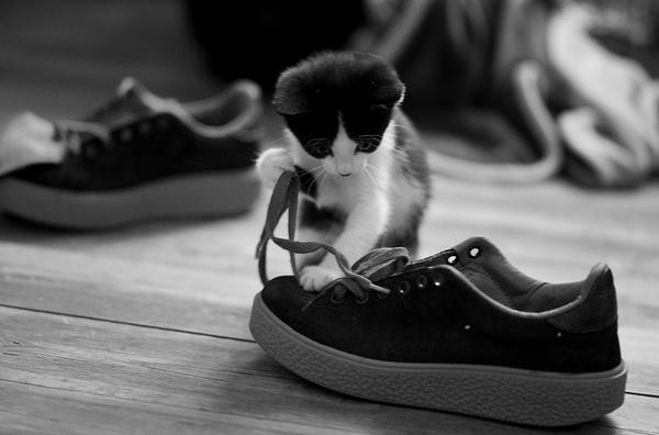 apprendre à lacer les chaussures