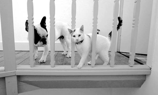 chien blanc ,chat blanc