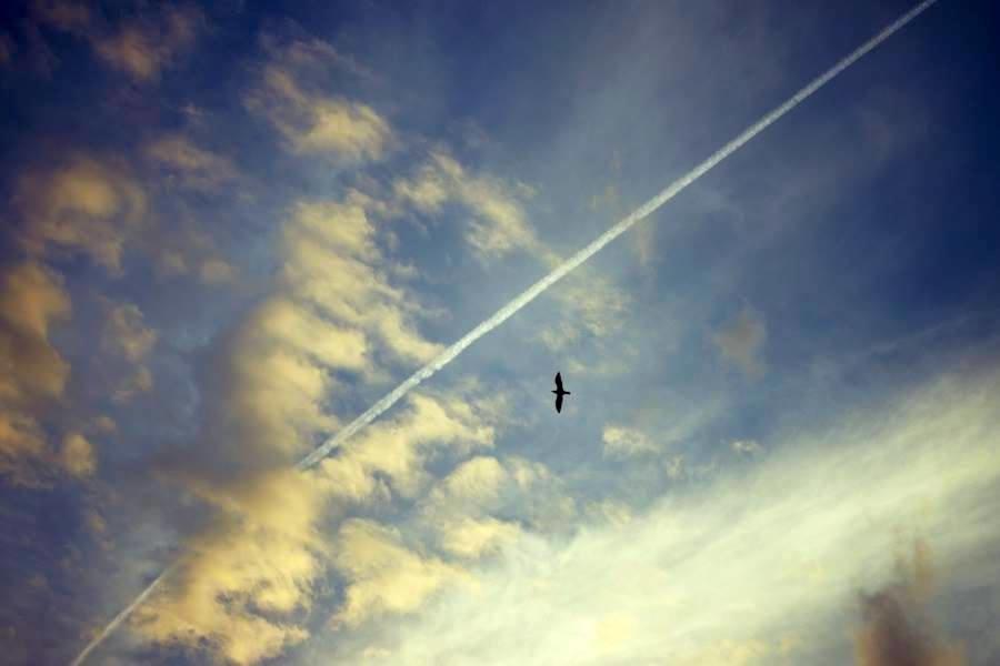 volare
