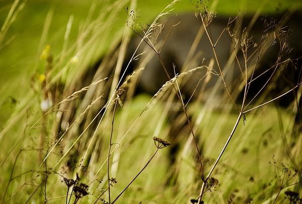 filigr-âne
