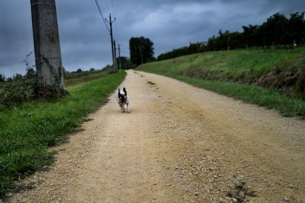 être chien de photographe nécessite de la patience