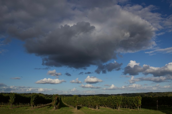 le temps se brouille sur les vignes