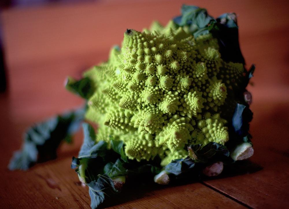 les fractales c'est chou !