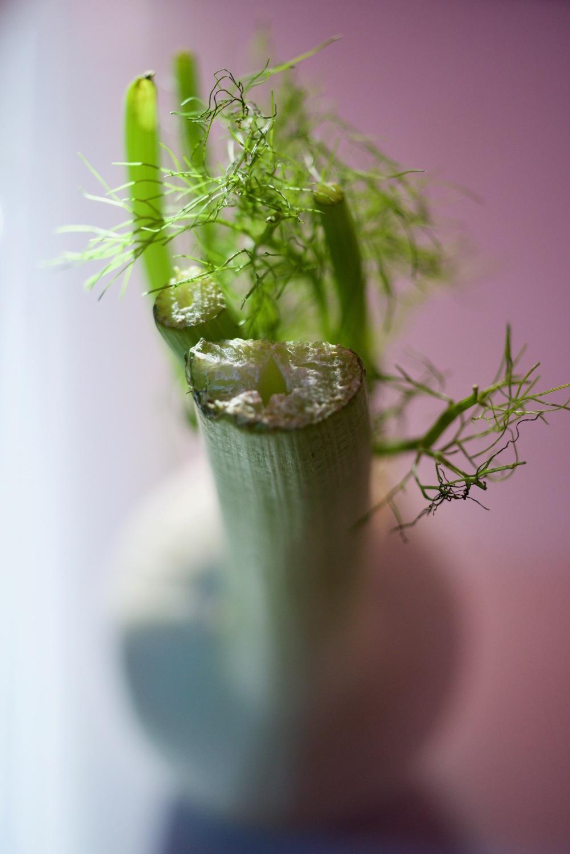 macro celeri