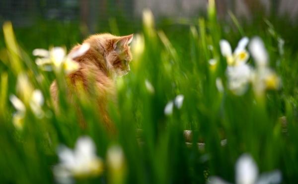 garder l'oeil sur les iris :p