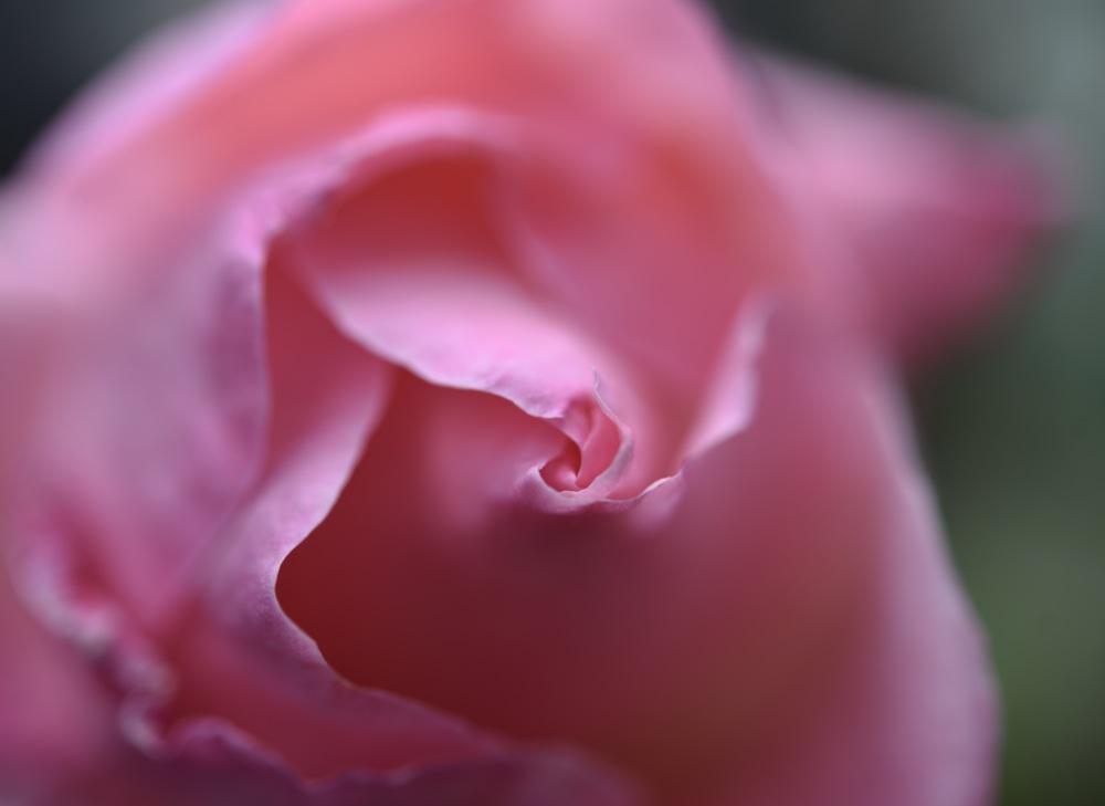 vie en rose 2
