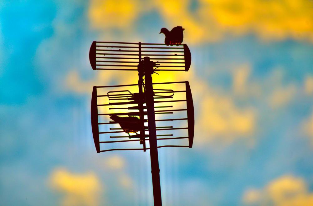 Pigeons  à la grille