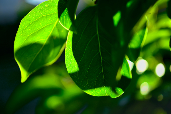 envers en vert