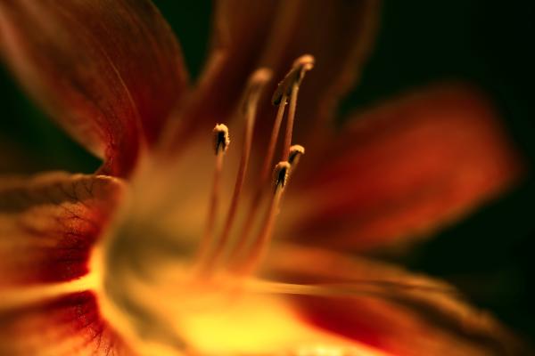 fleurs moches ,suite