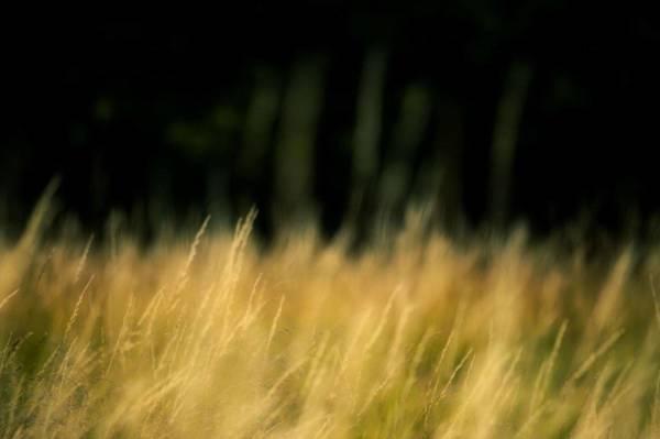 mouvance jaune