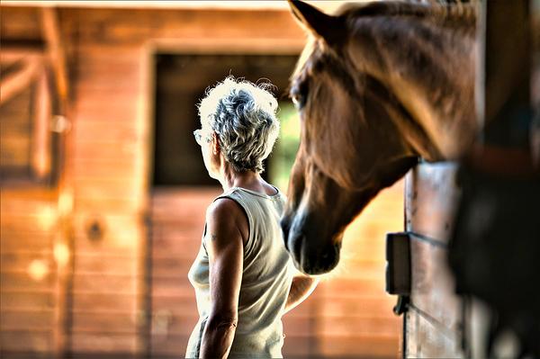 un cheval pour royaume
