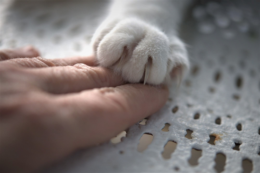 tous les chats du monde sont mes amis