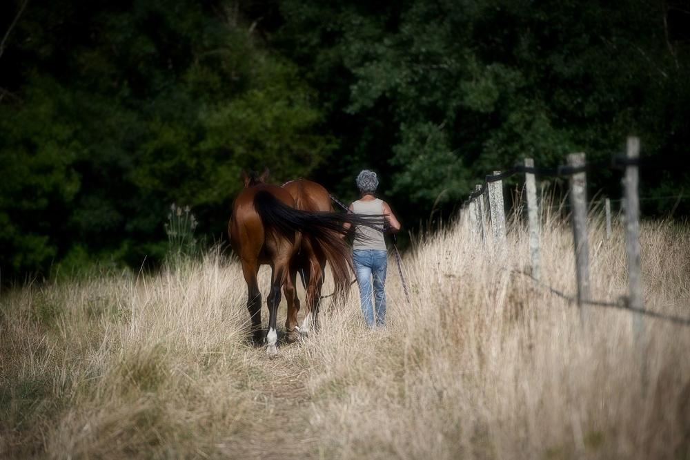 Vero et ses chevaux