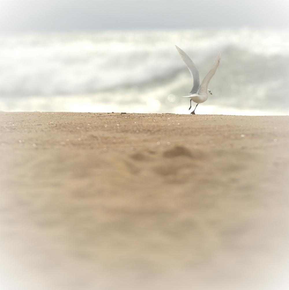 plage des bourdaines, décollage imminent