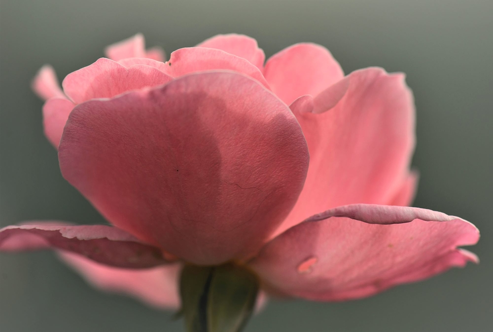 octobre rose
