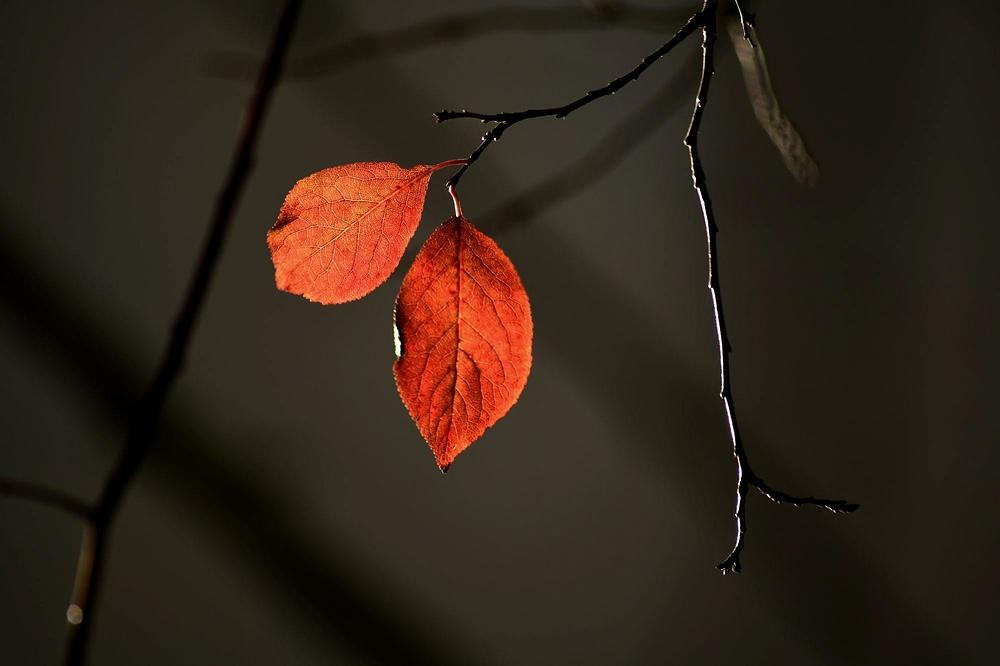 automne dans le prunier