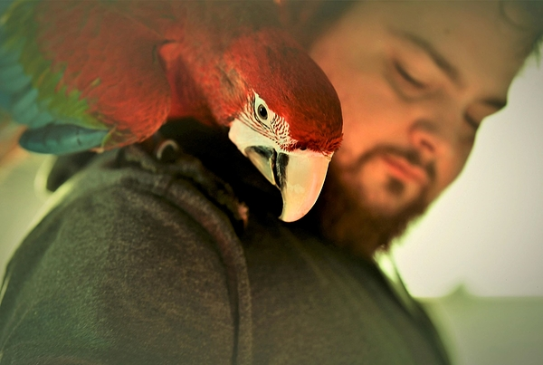 un oiseau sur l'épaule