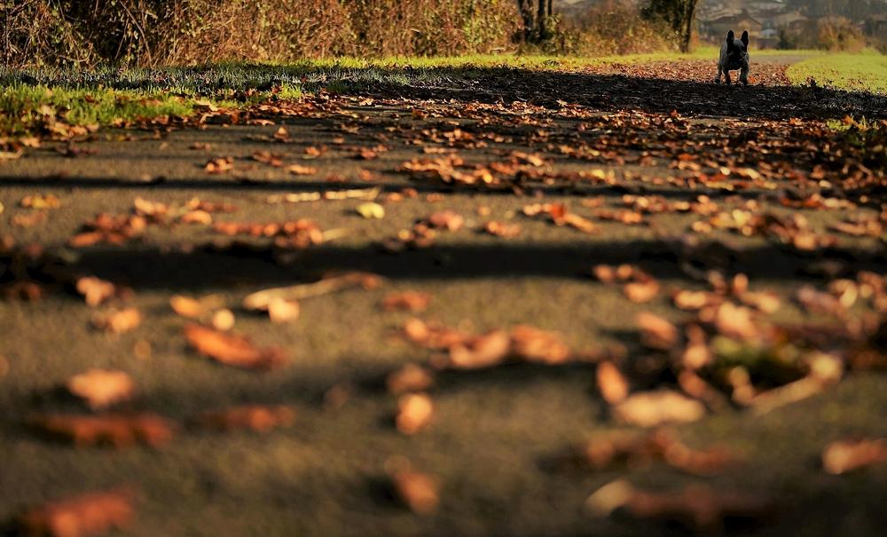oscar en automne