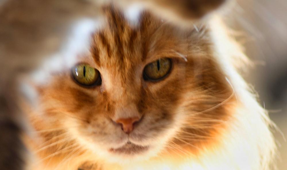 Quatorze,  le chat soleil