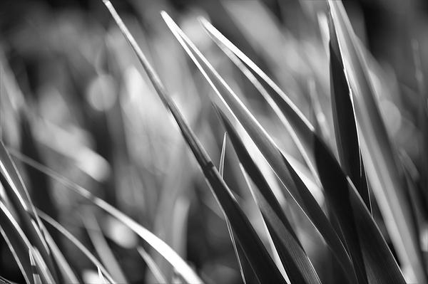 du vent dans les iris