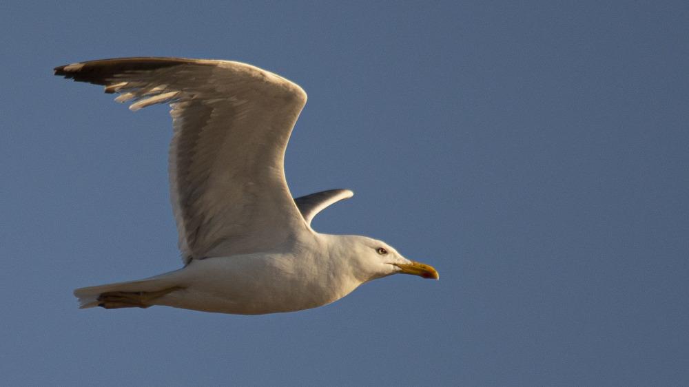 dans une autre vie je serai oiseau