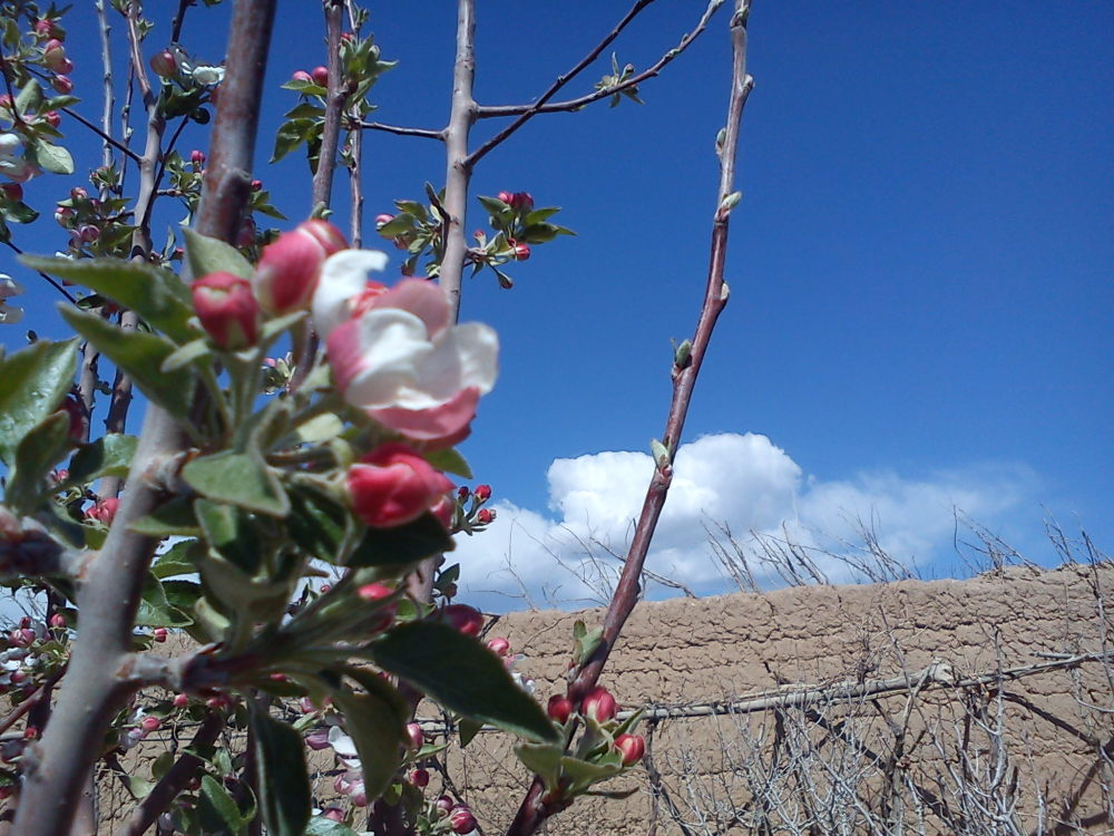 بهار و درخت