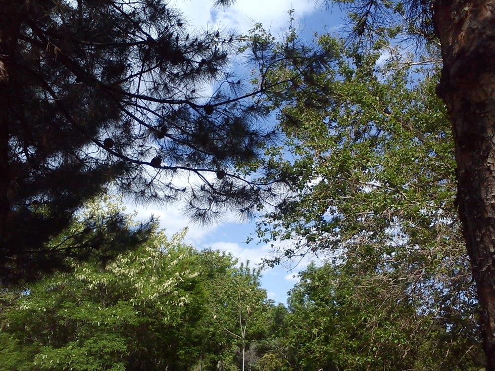 درخت و آسمان