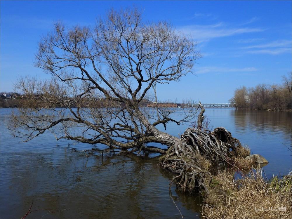 rivière des Prairies
