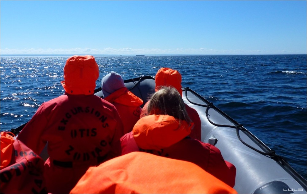 Les baleines seront au rendez-vous...
