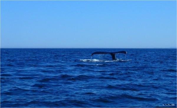Baleines (5)