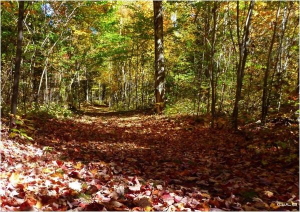 Tapis de feuilles